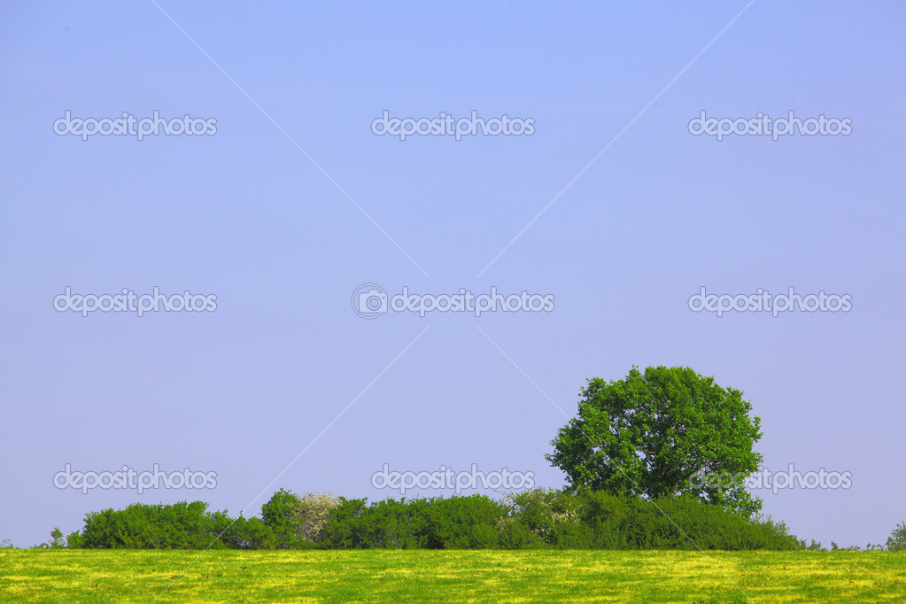Field, tree, bushes and blue sky  Stock Photo #10848879