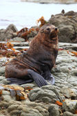 Cute wild seal — Stock Photo