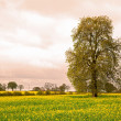 Tree with Field — Stock Photo