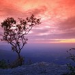 Lonely tree on cliff — Stock Photo