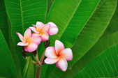Tropical flowers on green leafs — Stockfoto