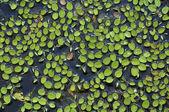 Grönt gräs konsistens — Stockfoto