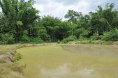Swamp for wildlife — Stock Photo