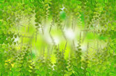 Green leaves for background — Stock Photo