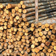Section of the circular timber — Stock Photo #12375946