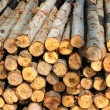 Section of the circular timber — Stock Photo #12375967