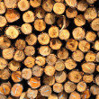 Section of the circular timber — Stock Photo #12376009