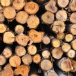 Section of the circular timber — Stock Photo #12376023