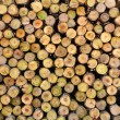 Section of the circular timber — Stock Photo #12376131