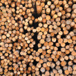 Section of the circular timber — Stock Photo #12376255