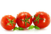 Wet tomatoes with greenery — Stock Photo