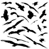 Various silhoutted eagles isolated — Stock Photo