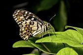 Motyl — Zdjęcie stockowe
