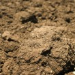 Agricultural land soil close up — Stock Photo