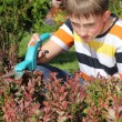 Young gardener — Stock Photo #10886053