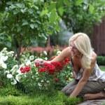 Gardening — Stock Photo #11119220