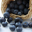 Blueberries — Stock Photo #11346574