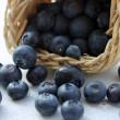 Blueberries — Stock Photo #11346574