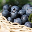 Basket with blueberries — Stock Photo #11346635