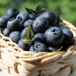 Blueberries in the basket — Stock Photo