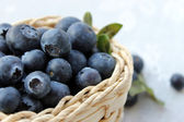 Blueberries closeup — Stock Photo