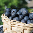 Blueberries in basket — Stock Photo
