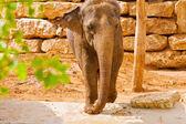 Elefant nära en tegelvägg — Stockfoto