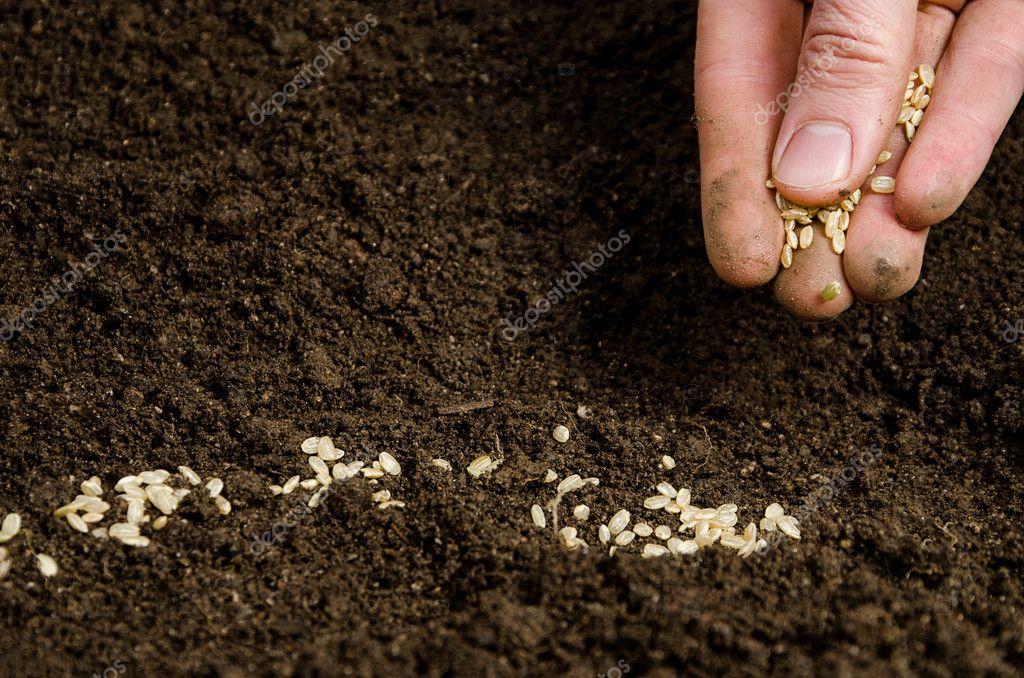 Семена цветов сажать в грунт