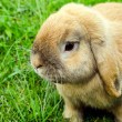 Rabit in grass — Stock Photo