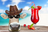 Summer cow — Stock Photo
