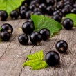 Black currant — Stock Photo #12125311