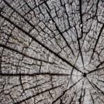 Tree cut. — Stock Photo