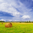 Rural landscape. — Stock Photo