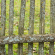 Stock Photo: Old fence.