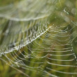 Spiderweb — Stock Photo #11805556