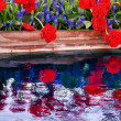 Stock Photo: Red Tulips Blue Grape Hyacinth Reflection Skagit Valley Washingt