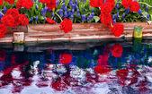Red Tulips Blue Grape Hyacinth Reflection Skagit Valley Washingt — Stock Photo