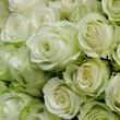 white roses — Stock Photo