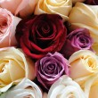 Assorted color of roses — Stock Photo