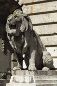 Lion statue, budapest — Stock Photo