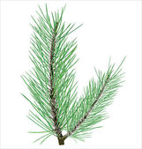 Pine branch on white background vector — Vecteur