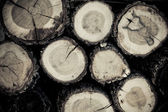 Section of logs — Stock Photo