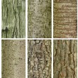 Patterns of trees trunk — Stock Photo