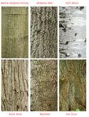Vzory stromů kmen — Stock fotografie