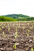Seedlings — Stockfoto