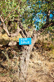 Tree for sale — Stockfoto