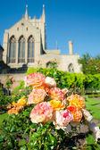 Rose garden — Photo