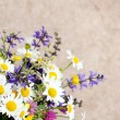 Beautiful wildflowers — Stock Photo