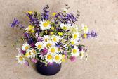 Mazzo di fiori di campo — Foto Stock