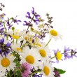 Wildflowers — Stockfoto